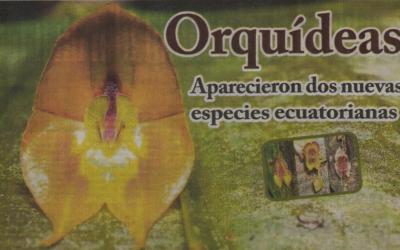 OPINIÓN (MACHALA): Orquídeas aparecieron dos nuevas especies ecuatorianas